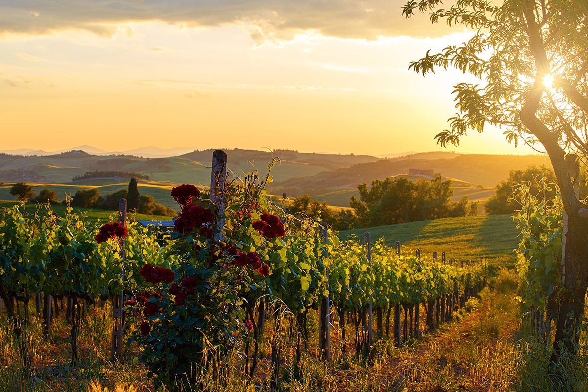 Most popular destinations for red wine lovers for Tuscan california