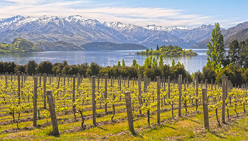 Your 5-Minute Guide to New Zealand Wine